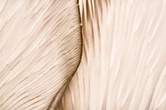 Muster auf einem Pilz Stockfotografie
