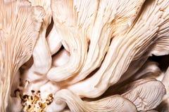 Muster auf einem Pilz Lizenzfreies Stockbild