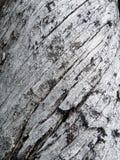 Muster auf einem toten Baum Lizenzfreie Stockbilder