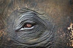 Muster, Augen und Haut von Elefanten Stockbild