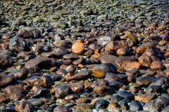 Muster, Beschaffenheit oder Hintergrund von den nassen Steinen, die auf einem Strand liegen Stockfoto