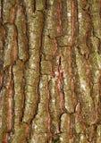 Muster-Betriebsstamm der Naturhintergrundbaumrinde natürlicher strukturierter lizenzfreies stockbild