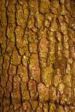 Muster-Betriebsstamm der Naturhintergrundbaumrinde natürlicher strukturierter stockfotos