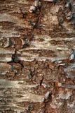 Muster-Betriebsstamm der Naturhintergrundbaumrinde natürlicher strukturierter lizenzfreie stockfotos