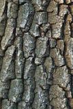 Muster-Betriebsstamm der Naturhintergrundbaumrinde natürlicher strukturierter lizenzfreies stockfoto