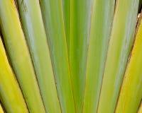 Muster der Banane wie Schlaghintergrund Stockbilder