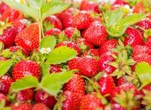 Muster der frischen roten Erdbeere mit Blättern Lizenzfreie Stockfotografie