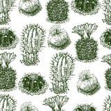 Muster der gezogenen Kakteen Stockfoto