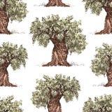 Muster der gezogenen Olivenbäume Stockfotos