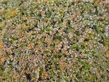 Muster der kleinen Grünpflanze Stockbild