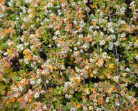 Muster der kleinen Grünpflanze, Hintergrund Lizenzfreies Stockfoto