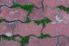 Muster der Kopfstein-Pflasterung mit frischem grünem Gras Stockfotografie