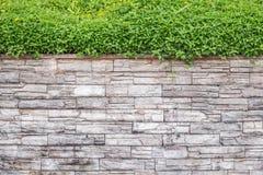 Muster der Natursteinwand und des grünen Efeus Garten dekorativ stockbild