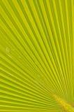 Muster der Palmblätter. Lizenzfreie Stockfotos