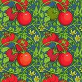 Muster der Tomatenniederlassung in einem Garten Rot und Grün Lizenzfreie Stockfotos