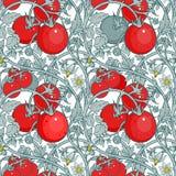 Muster der Tomatenniederlassung in einem Garten ROT UND WEISS Stockfotografie