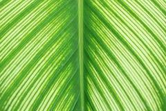 Muster des Blattes vom Baum Stockfotos