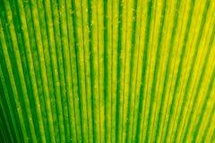 Muster des grün-gelben Blatthintergrundes Lizenzfreie Stockfotos