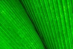 Muster des grünen Blathintergrundes Lizenzfreies Stockfoto