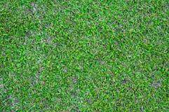 Muster des grünen Grases des Fußballplatzes maserte Hintergrund, strukturiertes Gras Lizenzfreie Stockbilder