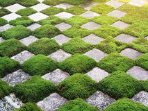 Muster des grünen Grases und des Felsens Stockfotos