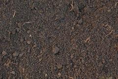 Muster des Humusbodens Stockfoto