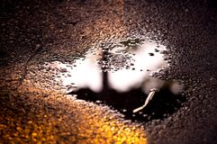 Muster des trockenen Blattes auf Straße nach starkem Regen, gelbes Blatt mit Wasser auf Straße stockfotos