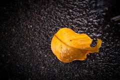 Muster des trockenen Blattes auf Straße nach starkem Regen, gelbes Blatt mit Wasser auf Straße stockfotografie