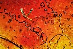 Muster durch das Mikroskop Lizenzfreies Stockfoto