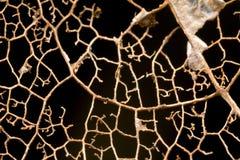 Muster in einem verfallenden Blatt Stockbild