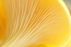 Muster eines Pilzes Stockfotos