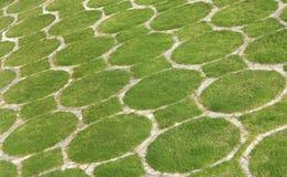 Muster entwickelt durch grünes Gras Lizenzfreies Stockbild