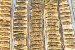 Muster gemacht von getrocknetem Caesalpinia pulcherrima Hüllen-Baumgebrauch Stockfotos