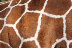 Muster Haut der Giraffe Stockfotos