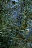 Muster im Holz stockbild