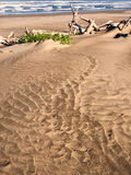 Muster im Strandsand führen, um Holz zu treiben Lizenzfreie Stockfotos