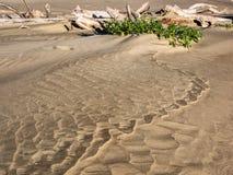 Muster im Strandsand führen, um Holz zu treiben Stockbilder