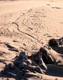 Muster im Strandsand führen, um Holz zu treiben Stockbild