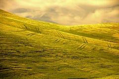 Muster im wachsenden Weizen Stockbild