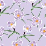 Muster mit Frühling mit purpurrotem Krokus vektor abbildung