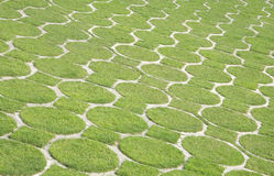 Muster mit grünem Gras, gehende grüne Kampagne Stockfotografie