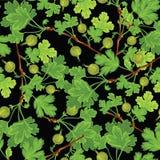Muster mit grüner Stachelbeere Lizenzfreies Stockbild