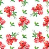 Muster mit Mohnblumen Stockbild