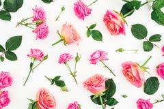 Muster mit Rosen blüht, Blumenblätter und Blätter auf weißem Hintergrund Flache Lage, Draufsicht stockbild