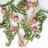Muster mit Rosen und Blättern auf weißem Hintergrund Flaches Design Draufsicht des Bildes Stockbild