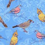 Muster mit Vögeln und Mandalahintergrund Lizenzfreies Stockbild