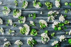Muster mit weißen Blumen und Niederlassungen auf altem Retro- Holztischhintergrund Lizenzfreies Stockbild