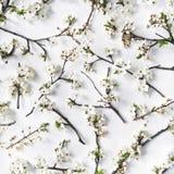 Muster mit weißen Blumen und Niederlassungsweißhintergrund Stockfotos