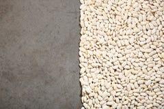 Muster mit weißen Bohnen auf grauem Hintergrund lizenzfreies stockbild