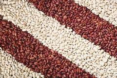 Muster mit weißen Bohnen und roten Bohnen lizenzfreies stockbild